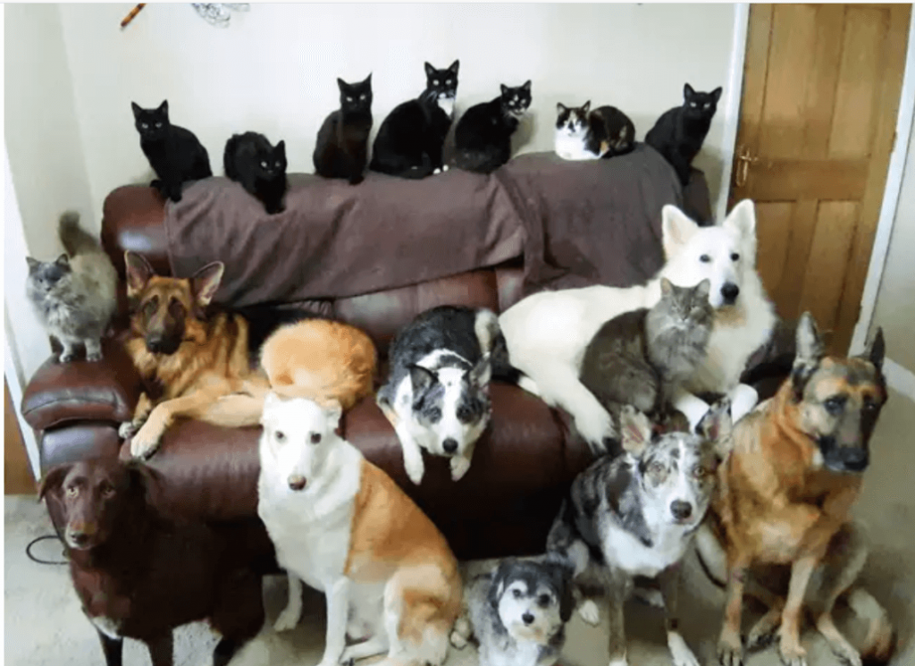 What a 'paw trait': Woman gets her 17 dogs and cats to pose together