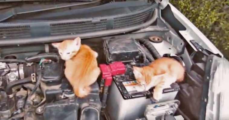 Remember To Knock On The Hood Of Your Car During The Winter To Check For Sleeping Cats