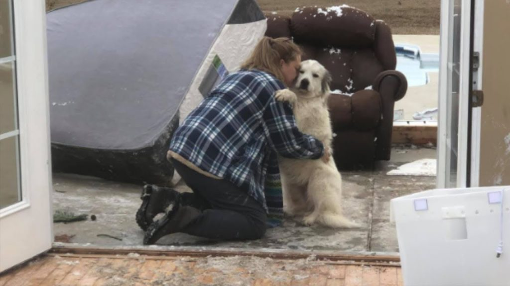 Dog Reunites With Her Family After A Tornado Destroyed Their Home