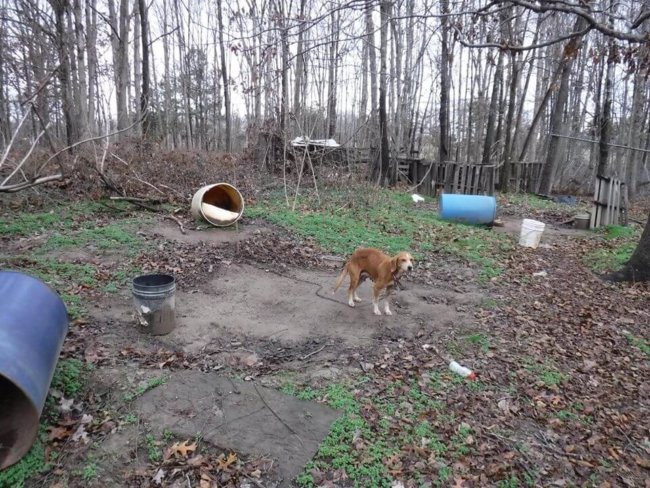 Mother dog and her 5 puppies living in muddy barrels rescued