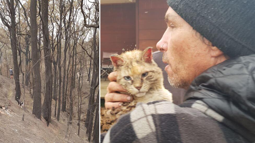 Family cat survives Australia bush fire and returns home after a week