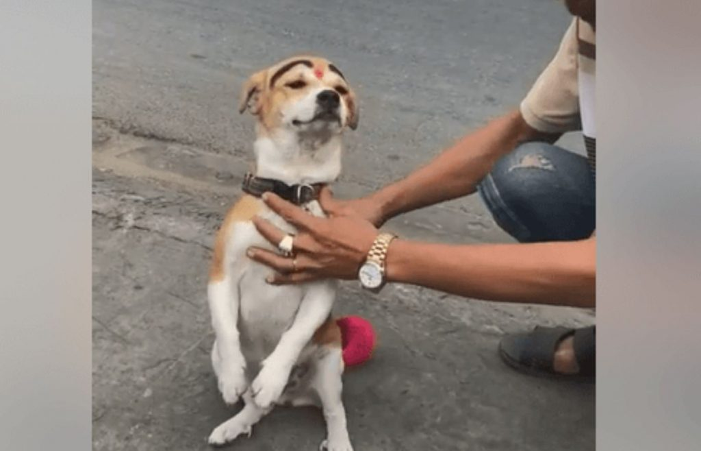 Dog in Vietnam forced to beg for money
