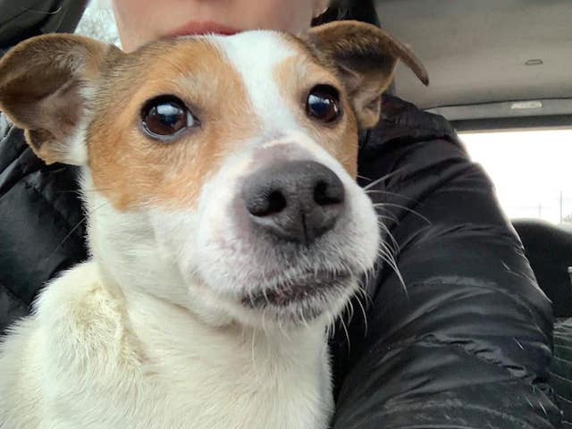 Dog Found in Zipped Suitcase Dumped at Park is Lucky to Be Alive