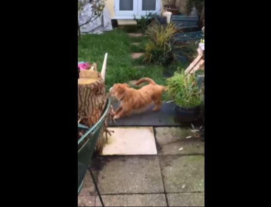 Doggo Wipes His Feet Before Entering Home