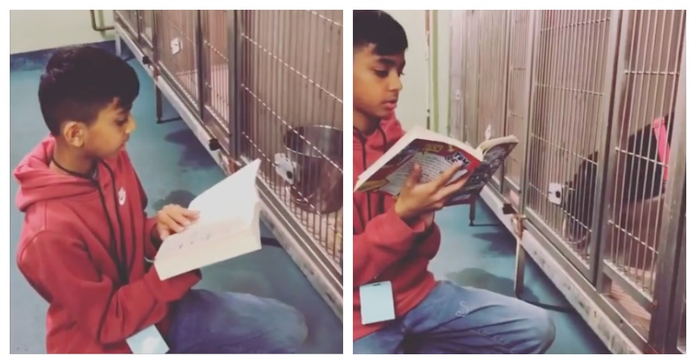 10-Year-Old Boy Comforts Shelter Dogs By Reading To Them Every Weekend