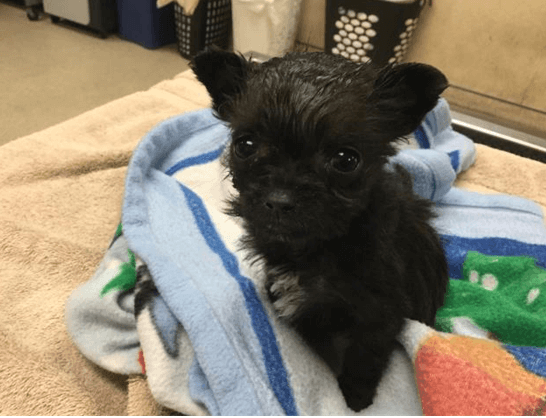 One-pound puppy dumped into Jurupa Valley dumpster