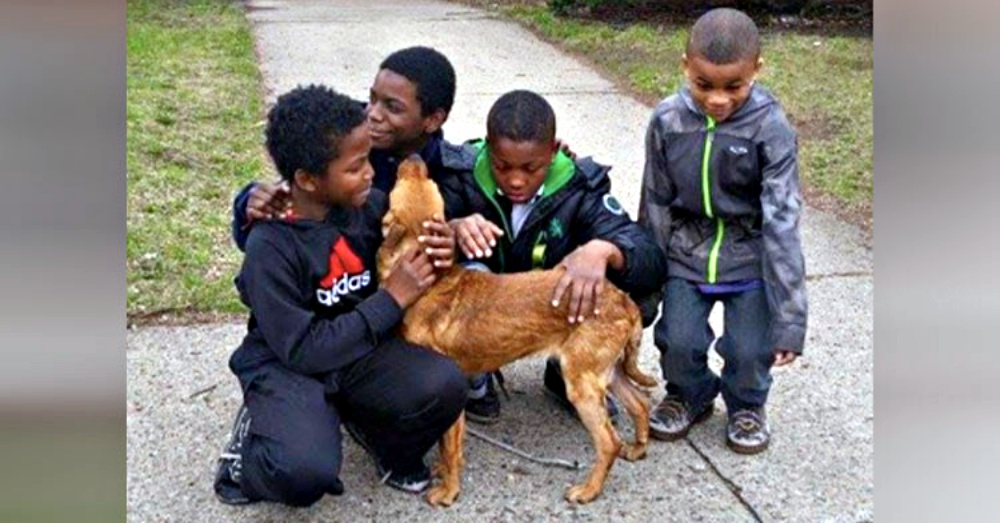 4 Boys Rescue Abandoned Dog They Found Tied Up In Bungee Cords.