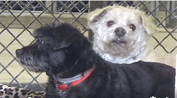 Bonded brothers left at shelter with little chance of staying together