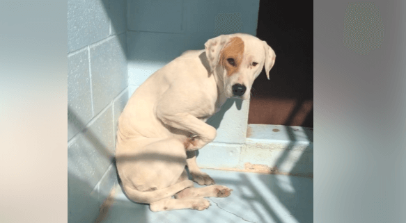 Owner said she was 'vicious' and needed to die at shelter