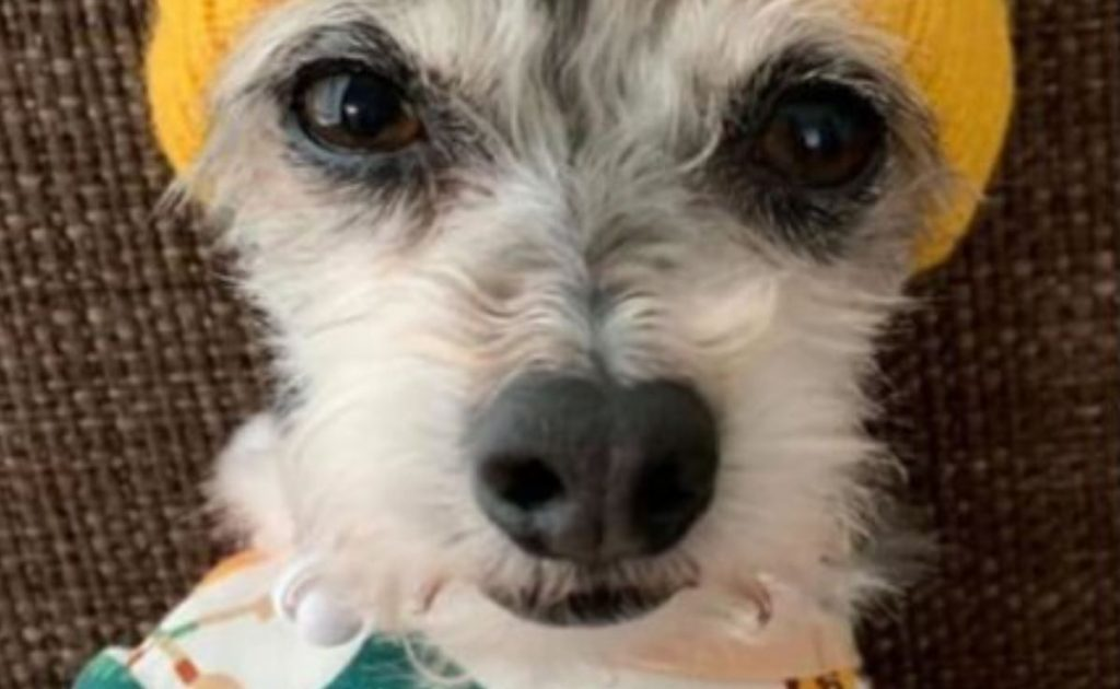 Bicyclist in Austin ran over woman's dog and now her pup is lost