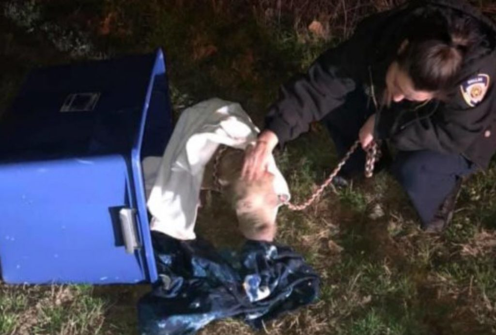 Dog dumped in Rubbermaid bucket and left on side of Texas road
