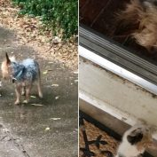 Dog Rescues Abandoned Kitten And Brings Her Home