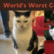 Rescue seeks home for 'World's Worst Cat'