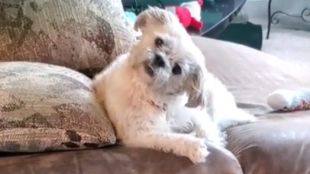 Dog hates it when owner sings and we don't blame him