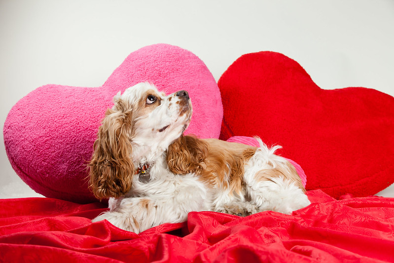 Animal Shelter Will Deliver A 'Puppergram' To Your Loved One's Office For Valentine's Day