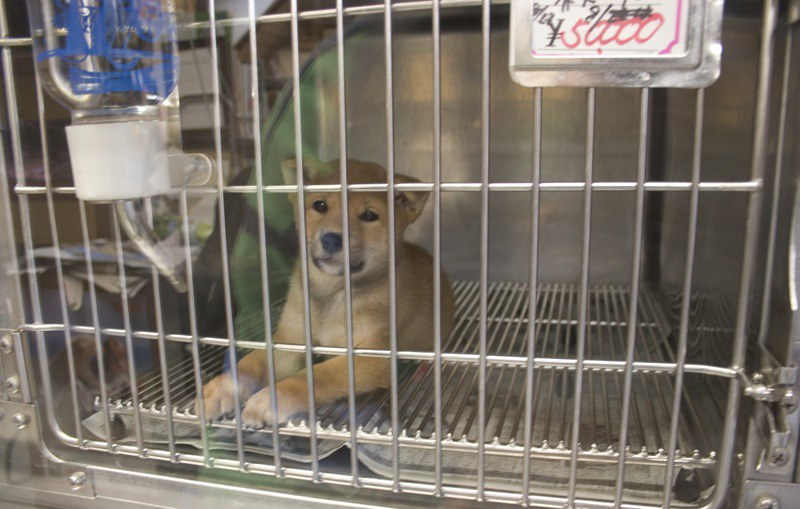 New Law Could Ban The Sales Of Dogs, Cats, Bunnies In New York Pet Stores