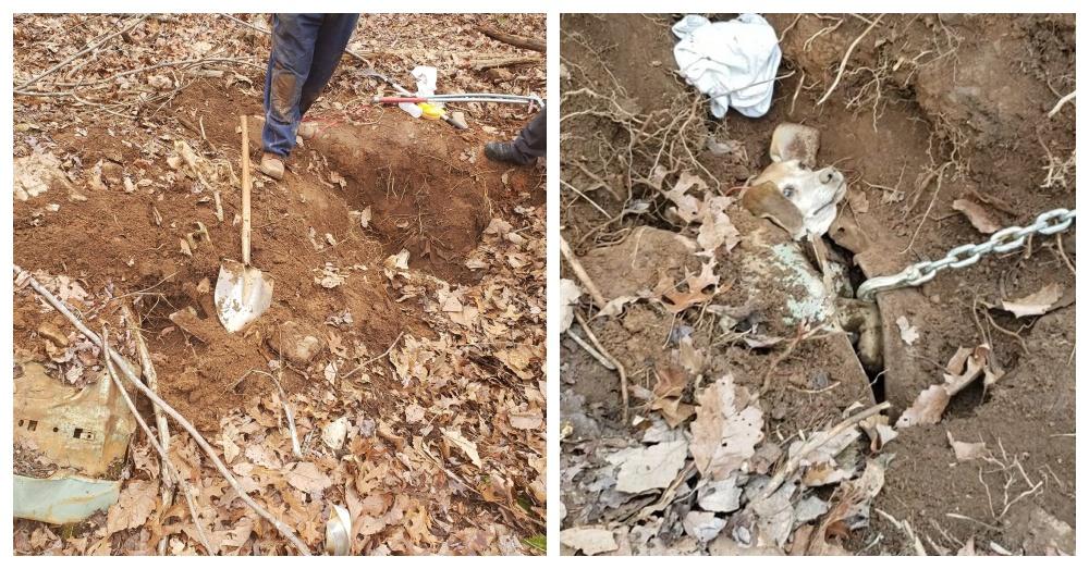 Rescuers Save Elderly Dog Who Got Stuck Chasing Rabbits Underground