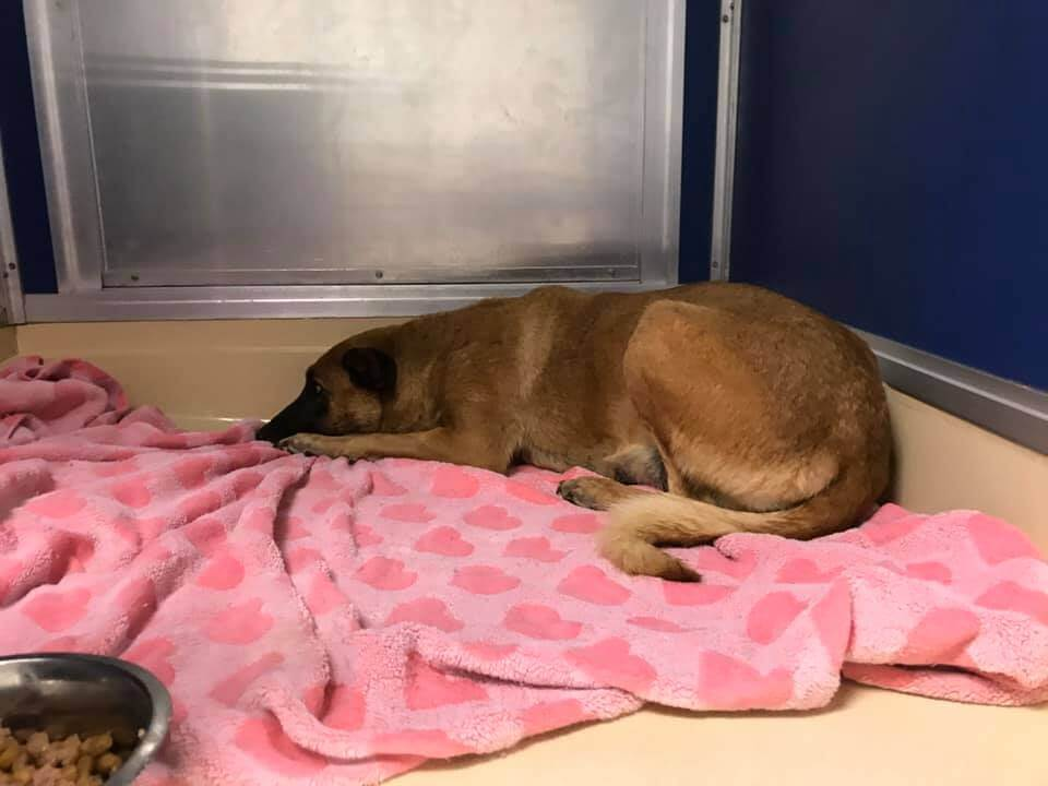 Abandoned dog too scared to walk at shelter and she is in danger