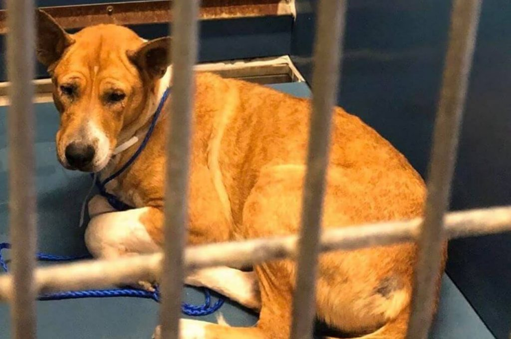 Frantic plea for help as young dog faces euthanasia at busy animal control