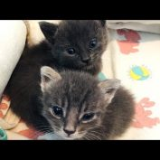 2 Minutes of Cute 3 Week Old Kittens Playing