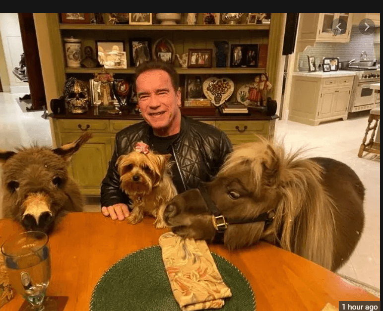 Arnold Schwarzenegger makes psa for coronavirus with donkey and horse