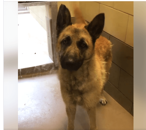 Code red – neglected 'dancing dog' can be put down at any moment