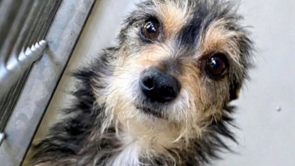 Need Rescue: Confiscated In Mid-February, Too Cute Not To Have Been Rescued Yet