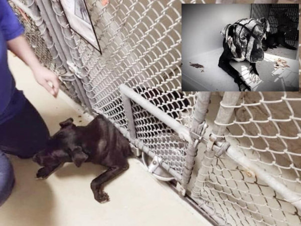 Distraught mother dog left behind at shelter and scheduled to die