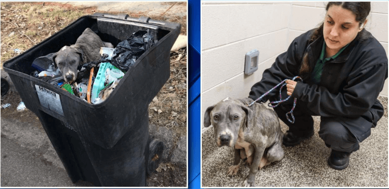 Dog who recently had puppies found dumped in trash can