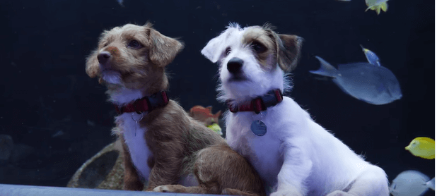 Watch: Most adorable puppies had the run of the Georgia Aquarium