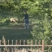 Animal rights group calls for investigation of man repeatedly shooting coyote