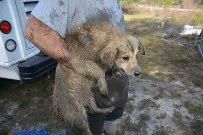 Sheriff deputies remove 20 huskies matted with feces and urine