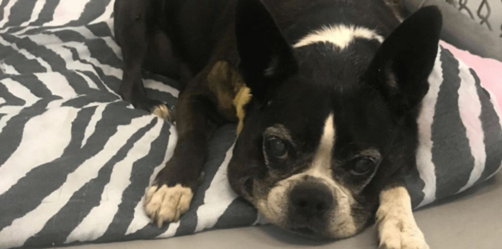 Last call – Elderly dog, 48 hours to death