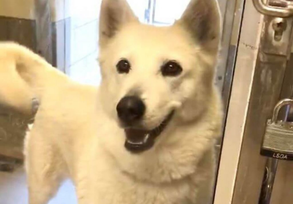 'Lulu' may have a beautiful smile but her life hangs in balance at shelter