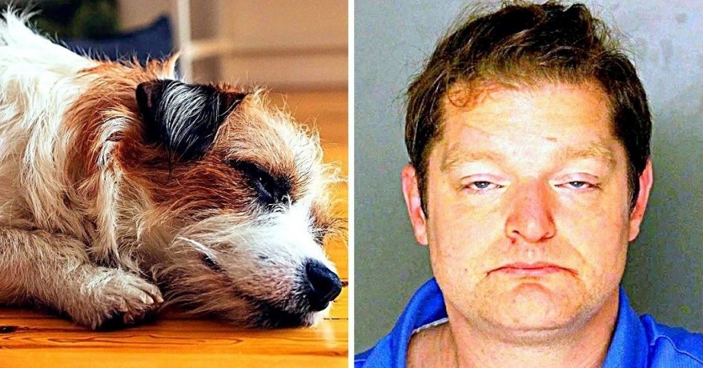 """Man Wanted To """"Discipline"""" His """"Annoying"""" Puppy, So He Beat The Puppy To Death"""