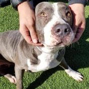 After months at busy shelter, overlooked dog is out of time