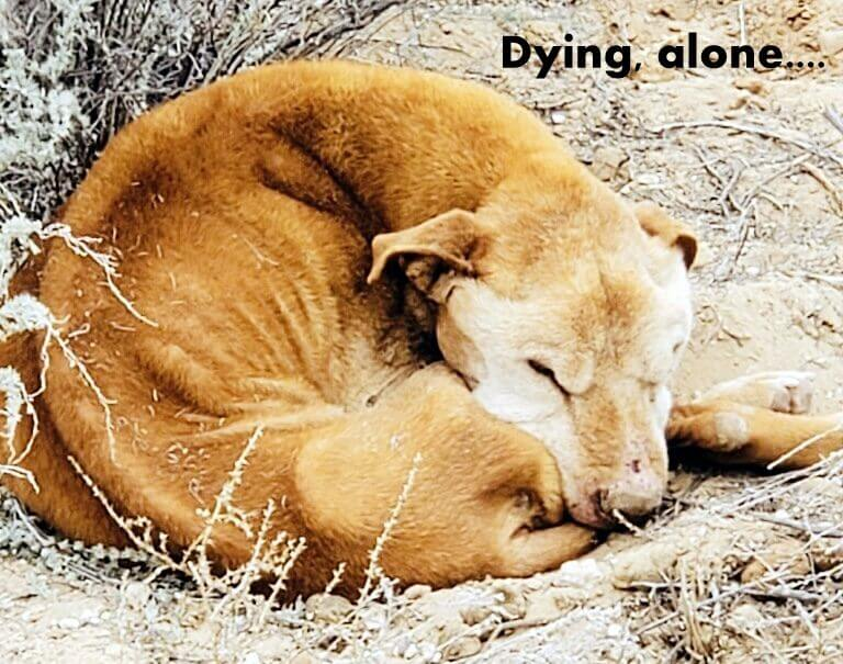 Elderly dog close to dying found curled up into a broken little ball
