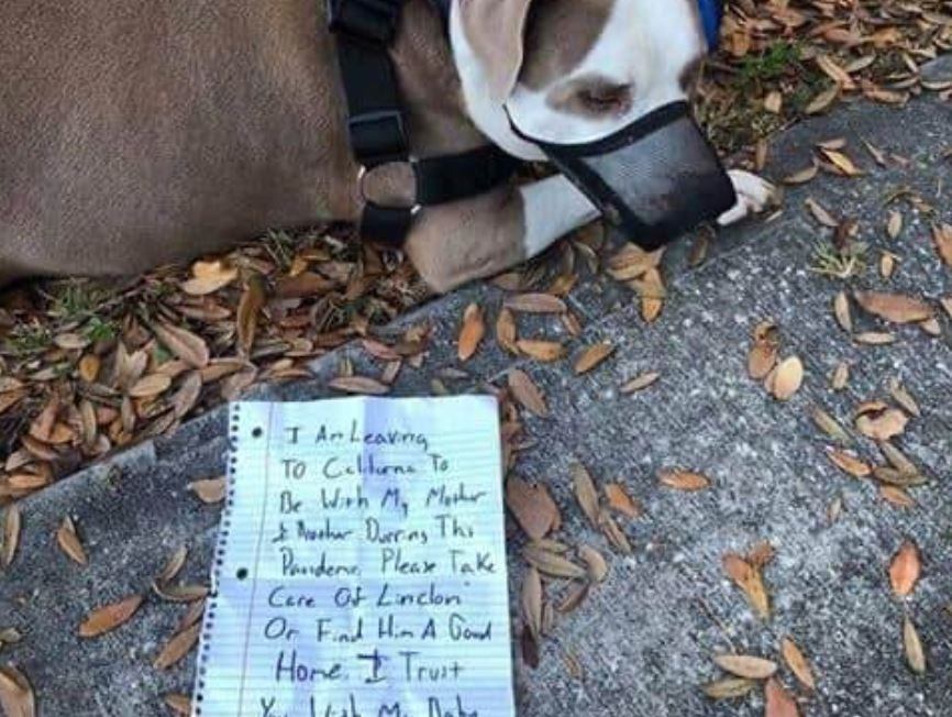 Dog left muzzled and tied to tree with note owner needed to help his mom