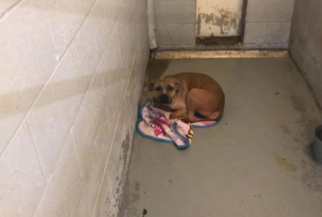 Lonely 257 shelter days for Octavia at Fairfield County shelter