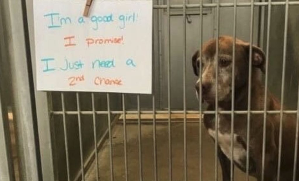 Dog homeless for over 7 years receives deluge of attention after social media post