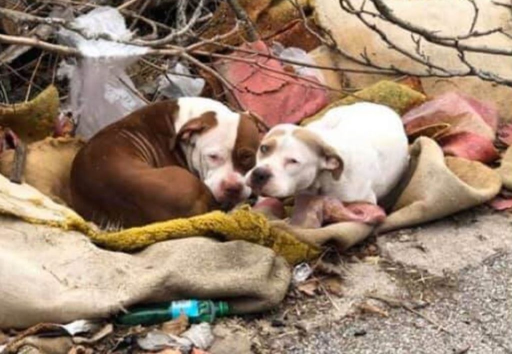 Bonded pair abandoned by their owner in midst of Coronavirus pandemic