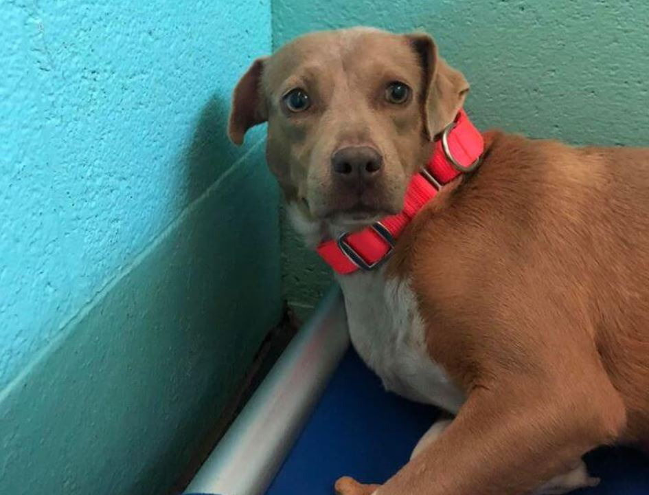 Scared and depressed surrendered pup afraid to leave her kennel