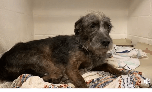 Neglected dog Sam brought to shelter as owner 'wanted him out'