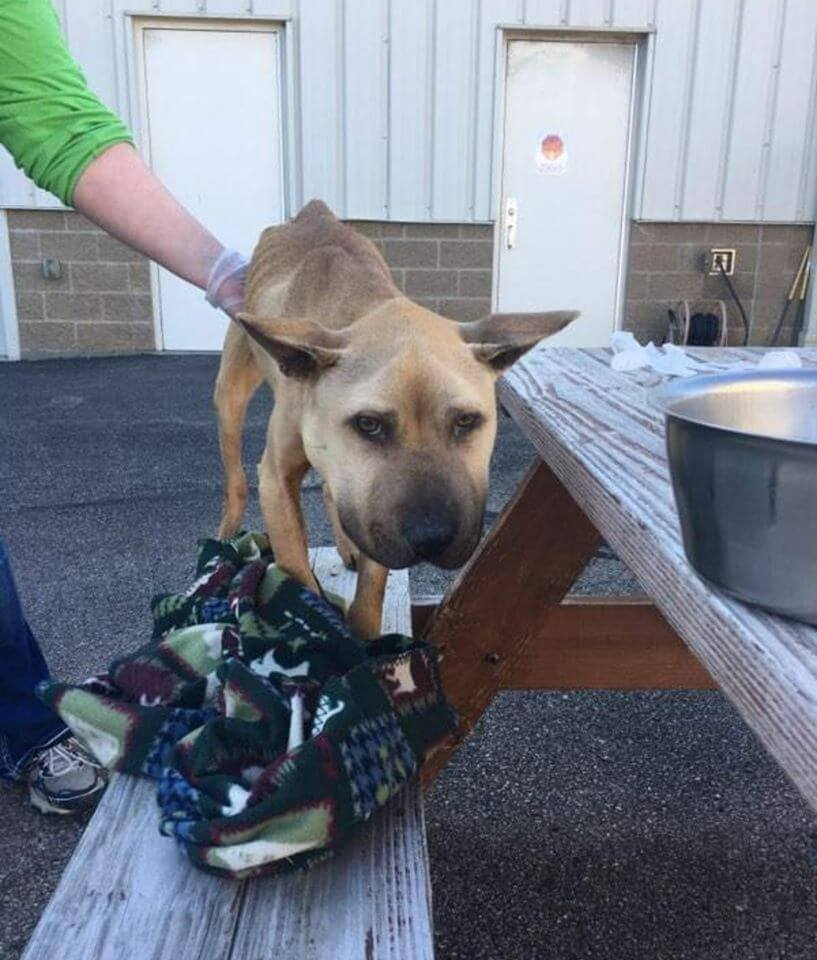 Sheriff's Office seeks information about starved, neglected dog
