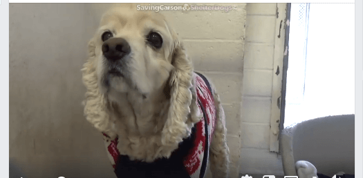 Senior dog, with mass on his leg, surrendered at the worst possible time