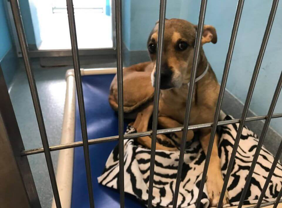 Most terrified dog at shelter – sad senior dog surrendered by her family