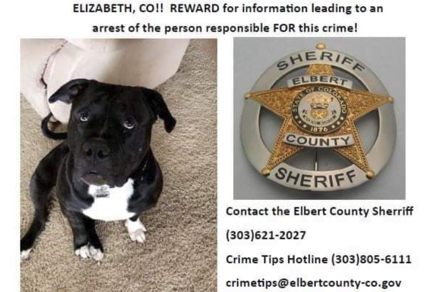 Still no break in case of murdered Colorado dog