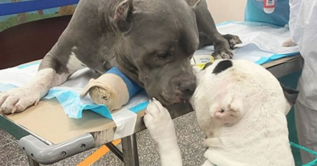 Two dogs comfort each other after owner died in hiking accident