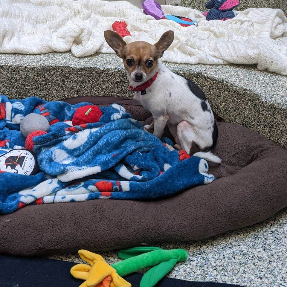 Dog in need of new home, and surgery, after owner died from Covid-19