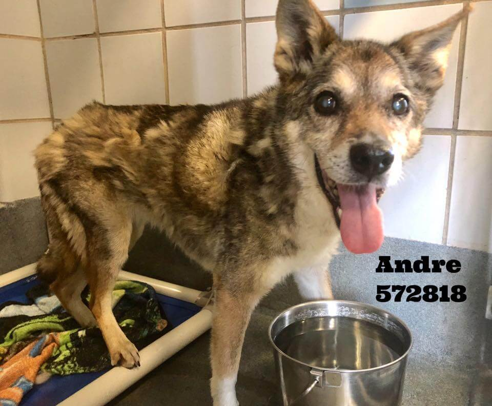 Elderly dog surrendered by family, now he is at risk of being put down
